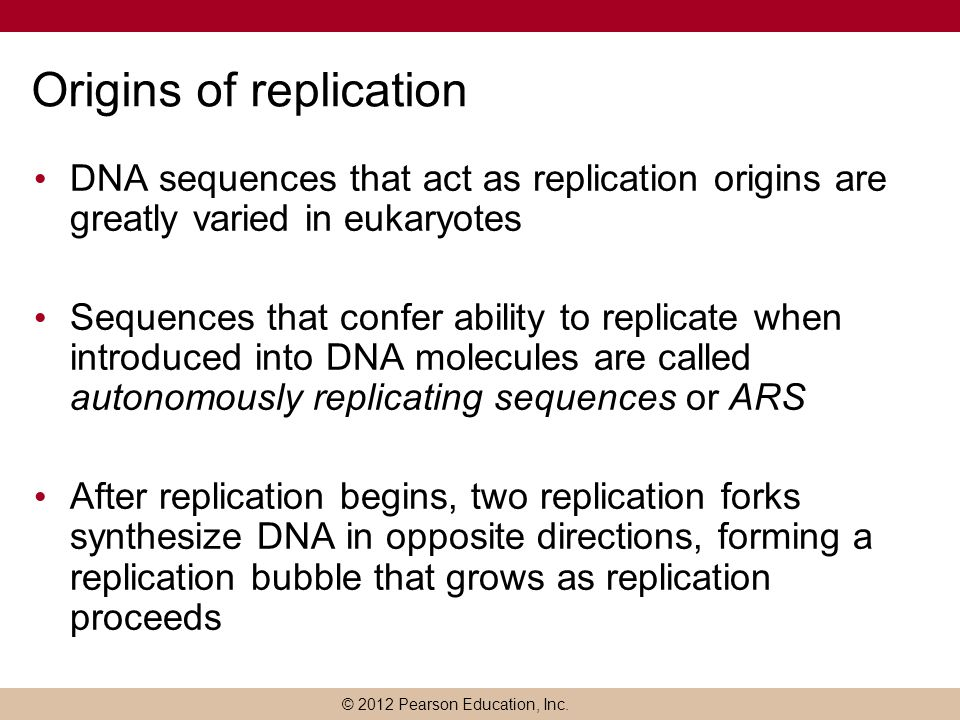 © 2012 Pearson Education, Inc. Origins of replication DNA sequences that act as replication origins are greatly varied in eukaryotes Sequences that co