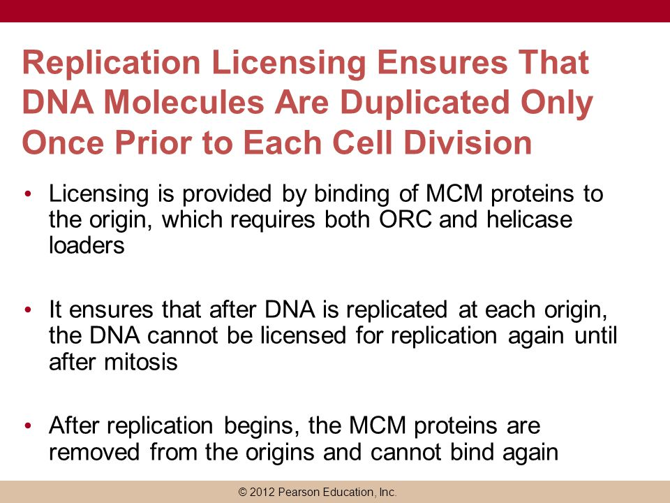 © 2012 Pearson Education, Inc. Replication Licensing Ensures That DNA Molecules Are Duplicated Only Once Prior to Each Cell Division Licensing is prov
