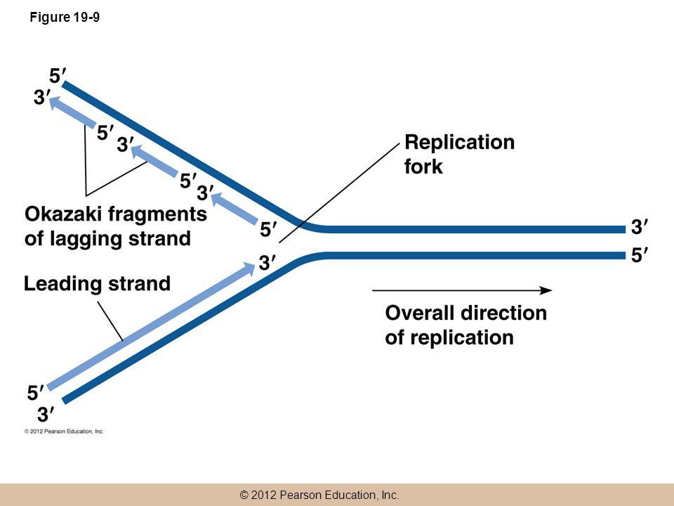 © 2012 Pearson Education, Inc. Figure 19-9