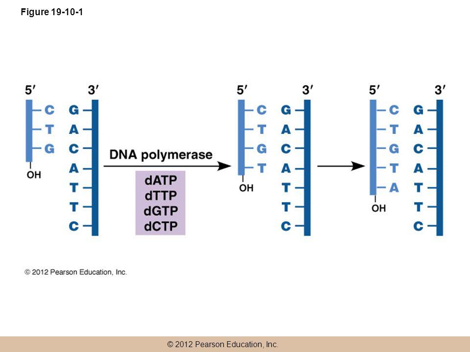 © 2012 Pearson Education, Inc. Figure 19-10-1
