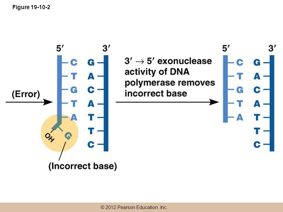 © 2012 Pearson Education, Inc. Figure 19-10-2