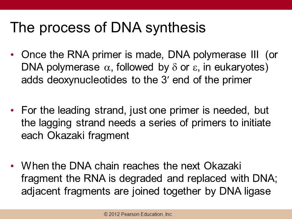 © 2012 Pearson Education, Inc. The process of DNA synthesis Once the RNA primer is made, DNA polymerase III (or DNA polymerase , followed by  or ,