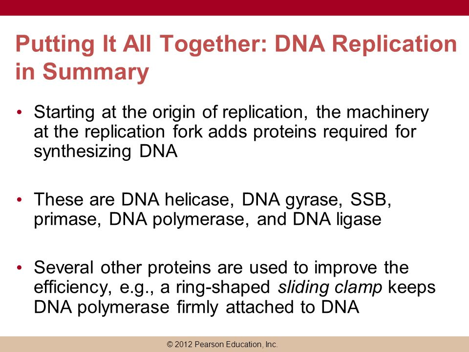 © 2012 Pearson Education, Inc. Putting It All Together: DNA Replication in Summary Starting at the origin of replication, the machinery at the replica