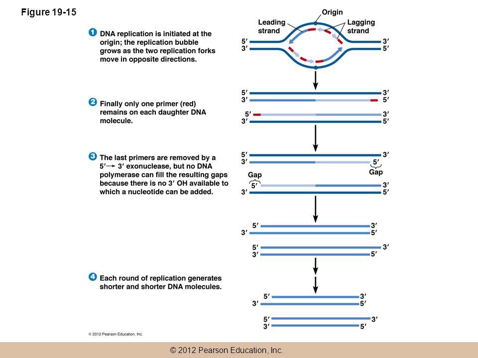 © 2012 Pearson Education, Inc. Figure 19-15