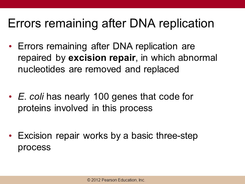 © 2012 Pearson Education, Inc. Errors remaining after DNA replication Errors remaining after DNA replication are repaired by excision repair, in which