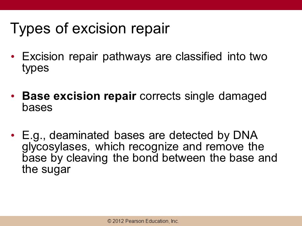 © 2012 Pearson Education, Inc. Types of excision repair Excision repair pathways are classified into two types Base excision repair corrects single da