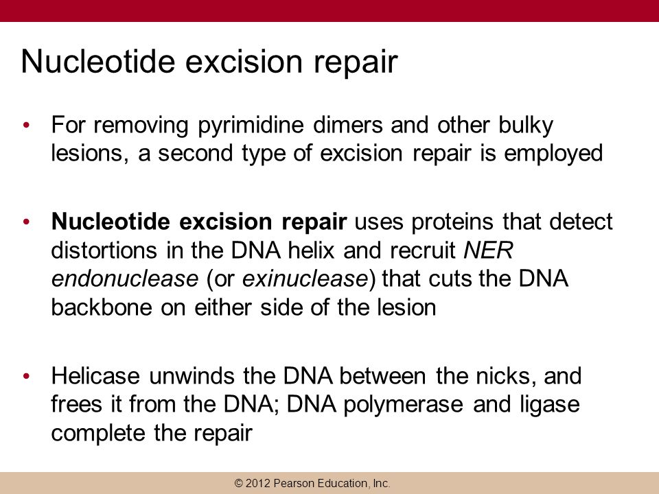 © 2012 Pearson Education, Inc. Nucleotide excision repair For removing pyrimidine dimers and other bulky lesions, a second type of excision repair is