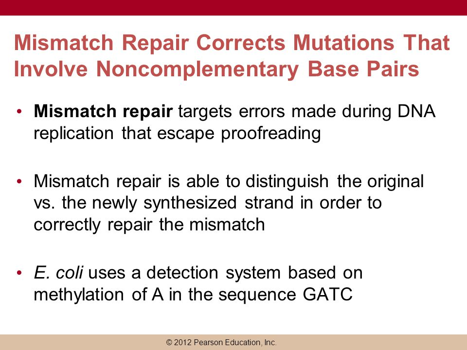 © 2012 Pearson Education, Inc. Mismatch Repair Corrects Mutations That Involve Noncomplementary Base Pairs Mismatch repair targets errors made during