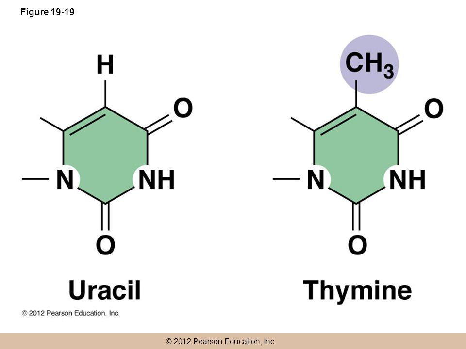 © 2012 Pearson Education, Inc. Figure 19-19