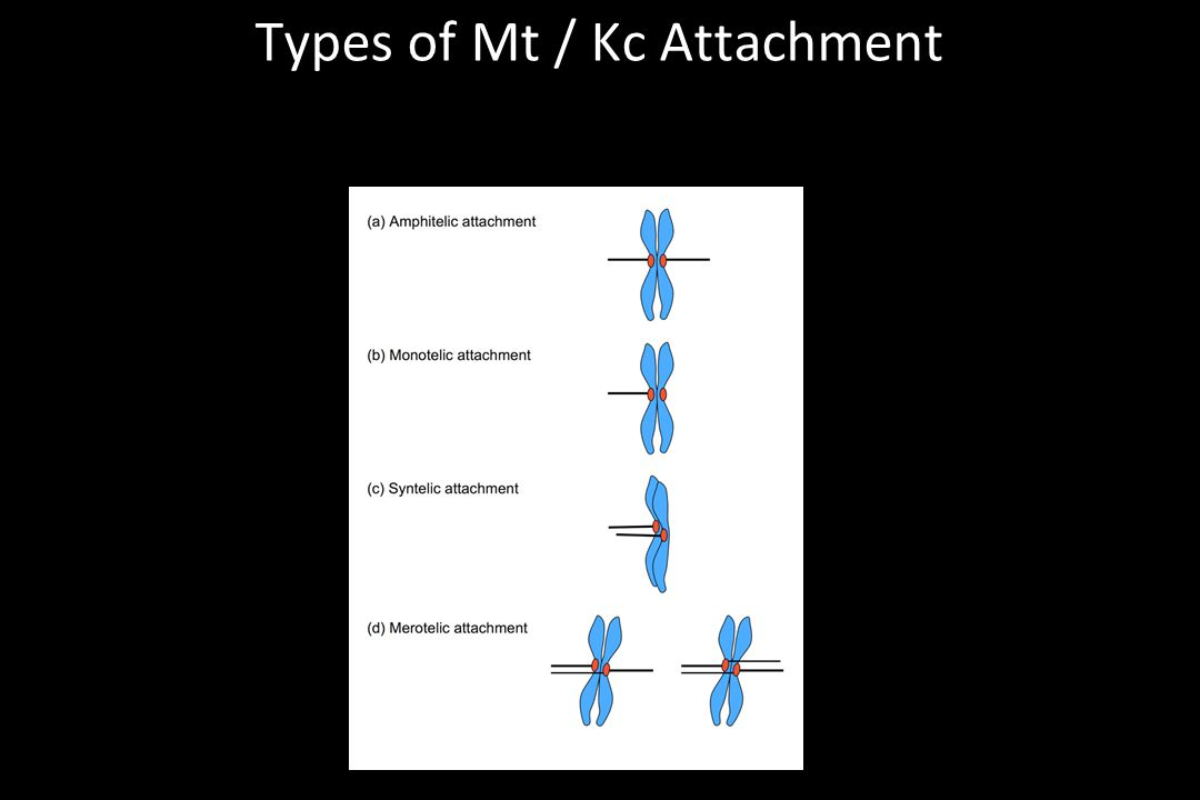 Types of Mt / Kc Attachment