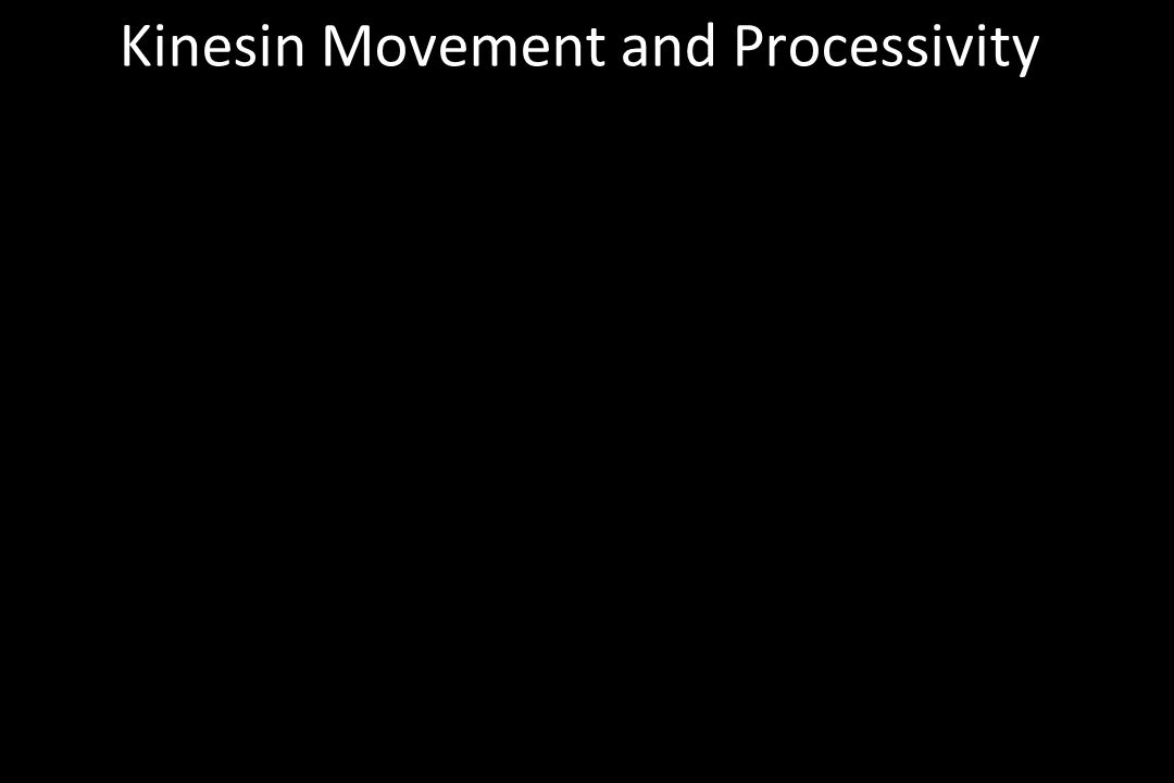 Kinesin Movement and Processivity