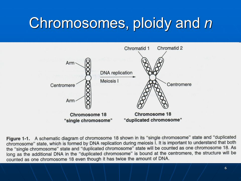 6 Chromosomes, ploidy and n