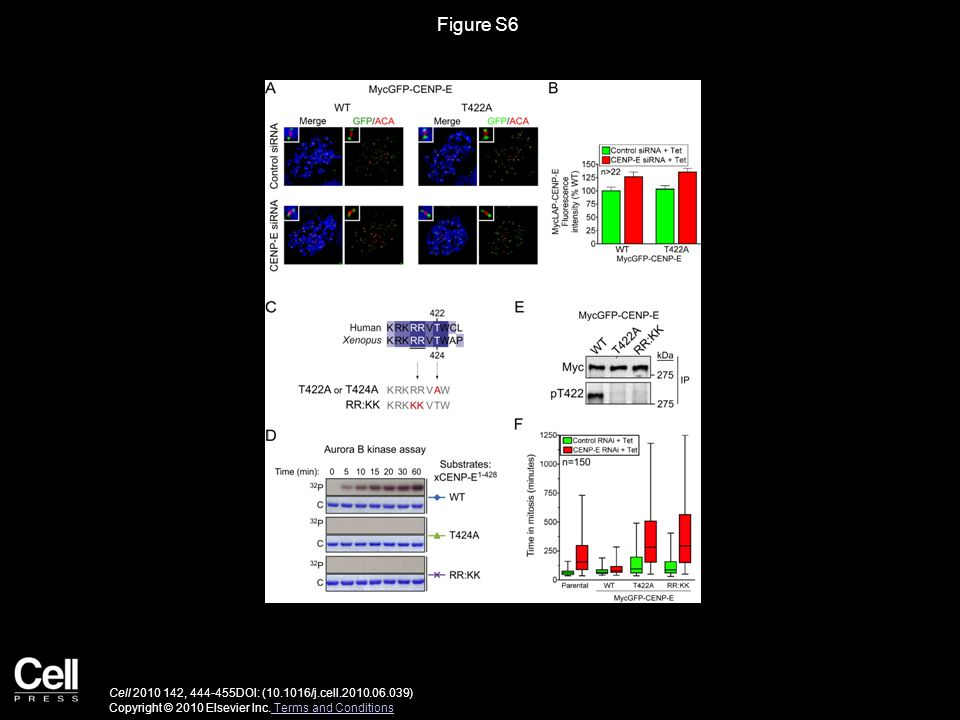 Figure S6 Cell 2010 142, 444-455DOI: (10.1016/j.cell.2010.06.039) Copyright © 2010 Elsevier Inc.