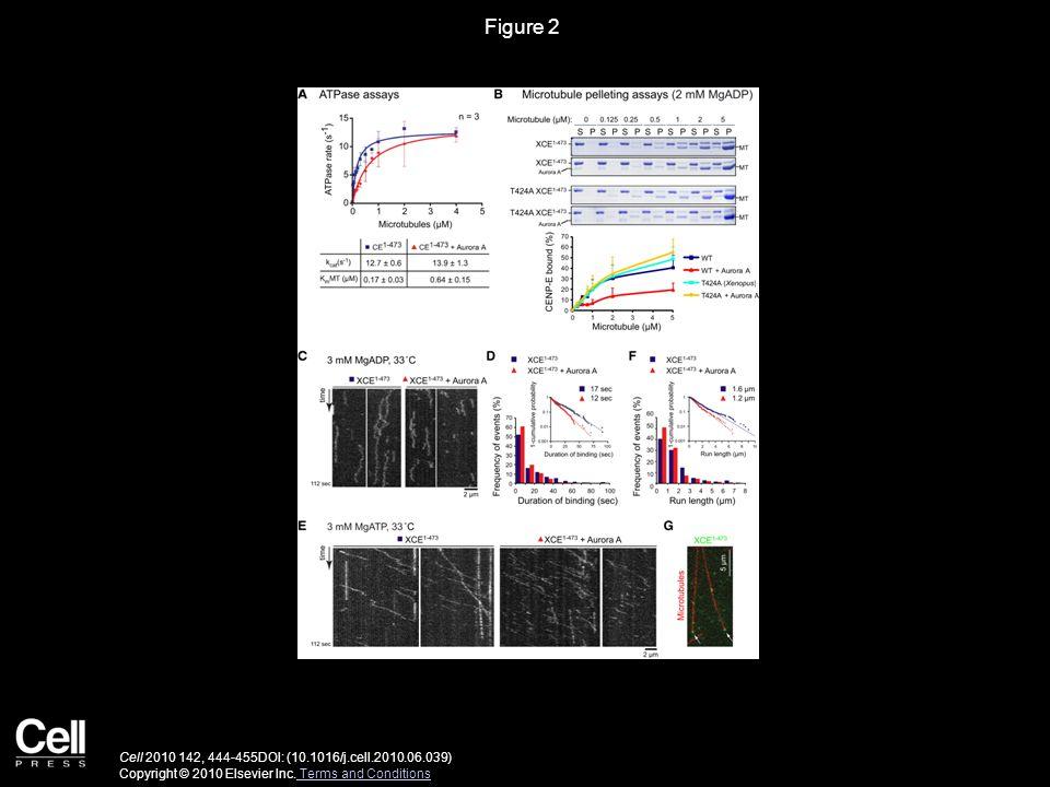 Figure 2 Cell 2010 142, 444-455DOI: (10.1016/j.cell.2010.06.039) Copyright © 2010 Elsevier Inc.
