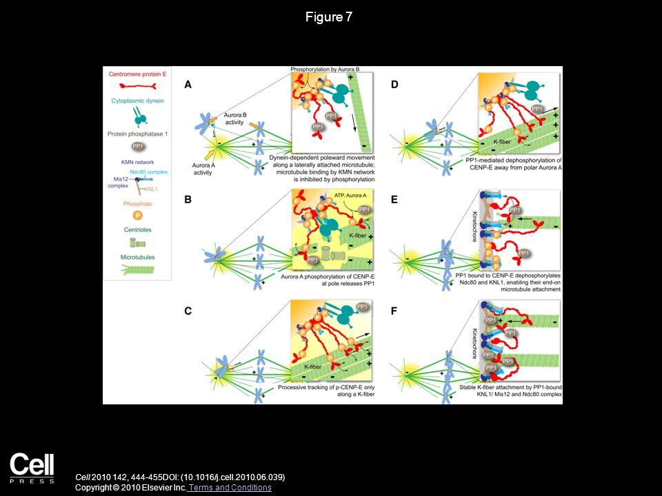Figure 7 Cell 2010 142, 444-455DOI: (10.1016/j.cell.2010.06.039) Copyright © 2010 Elsevier Inc.