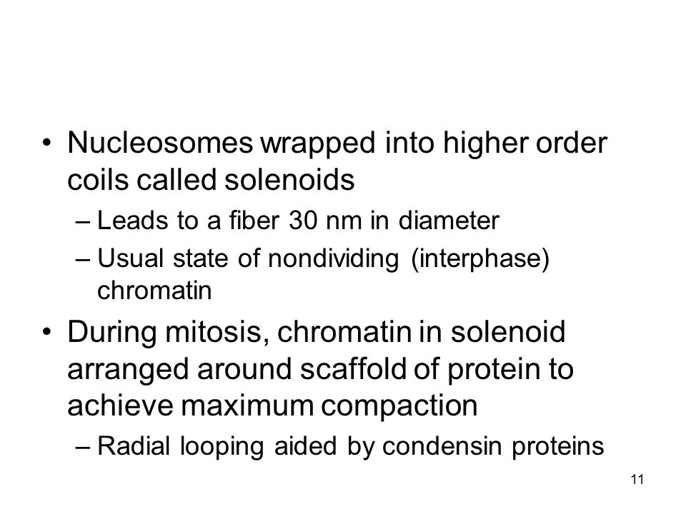 Nucleosomes wrapped into higher order coils called solenoids –Leads to a fiber 30 nm in diameter –Usual state of nondividing (interphase) chromatin Du