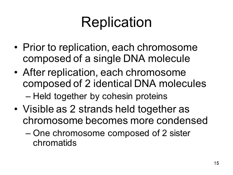 Replication Prior to replication, each chromosome composed of a single DNA molecule After replication, each chromosome composed of 2 identical DNA mol