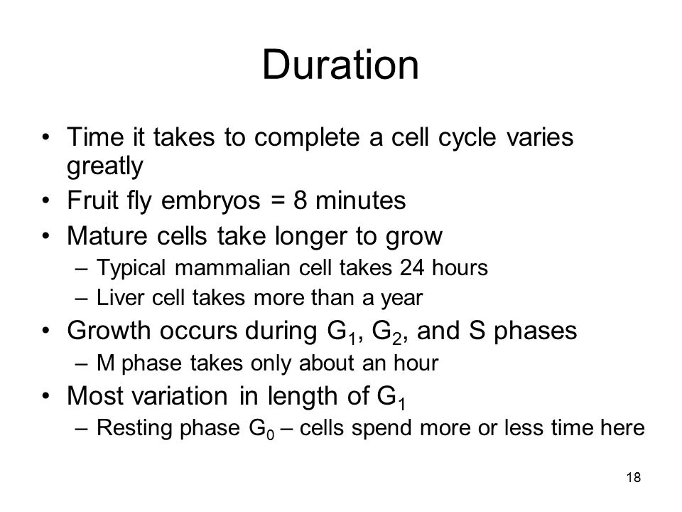 18 Duration Time it takes to complete a cell cycle varies greatly Fruit fly embryos = 8 minutes Mature cells take longer to grow –Typical mammalian ce