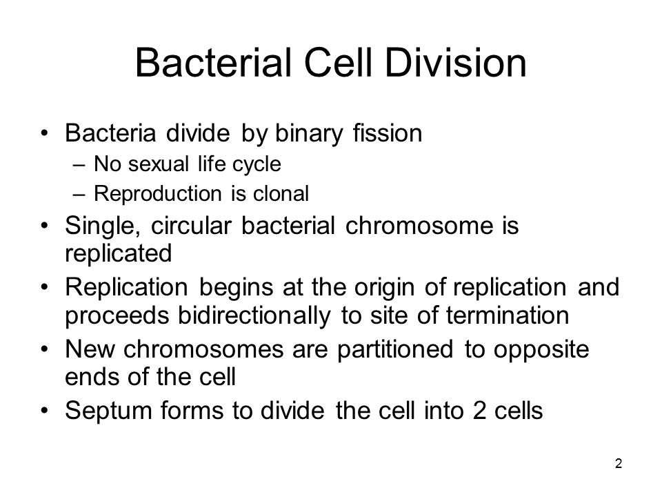 2 Bacterial Cell Division Bacteria divide by binary fission –No sexual life cycle –Reproduction is clonal Single, circular bacterial chromosome is rep