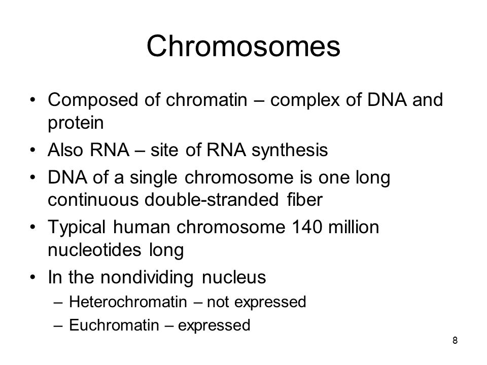 Chromosomes Composed of chromatin – complex of DNA and protein Also RNA – site of RNA synthesis DNA of a single chromosome is one long continuous doub