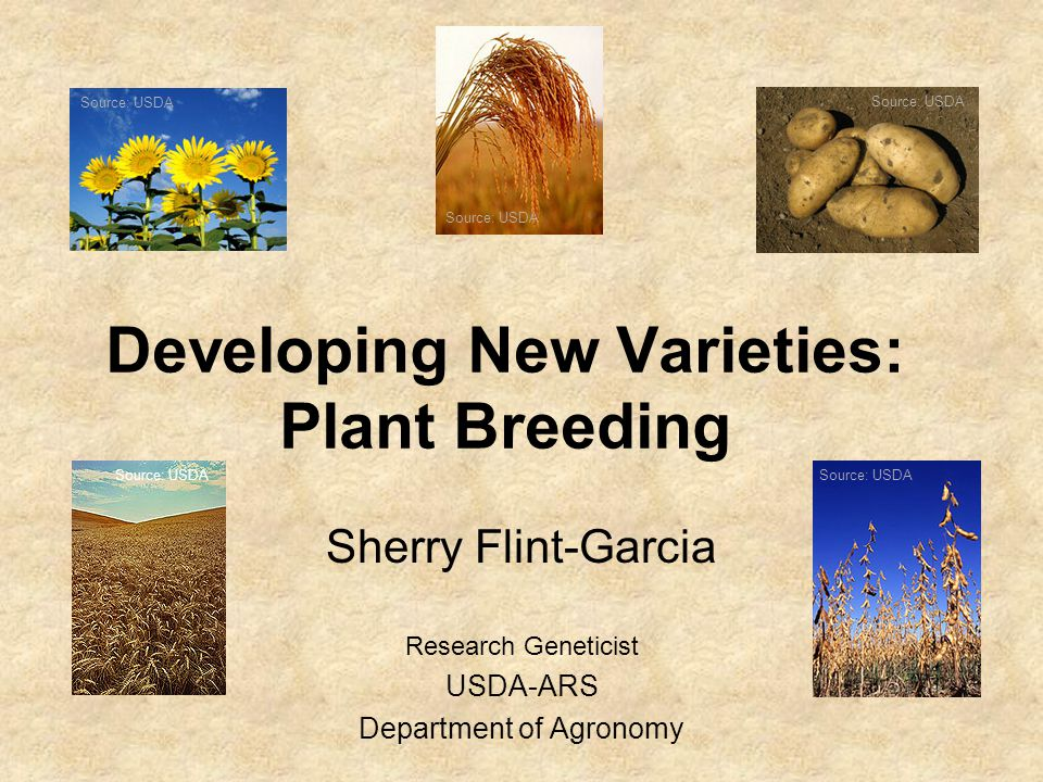 Developing New Varieties: Plant Breeding Sherry Flint-Garcia Research Geneticist USDA-ARS Department of Agronomy Source: USDA