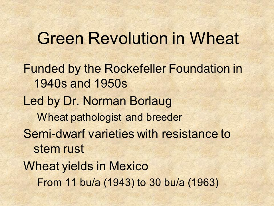 Green Revolution in Wheat Funded by the Rockefeller Foundation in 1940s and 1950s Led by Dr. Norman Borlaug Wheat pathologist and breeder Semi-dwarf v