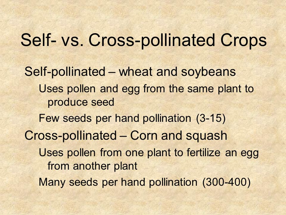 Self- vs. Cross-pollinated Crops Self-pollinated – wheat and soybeans Uses pollen and egg from the same plant to produce seed Few seeds per hand polli