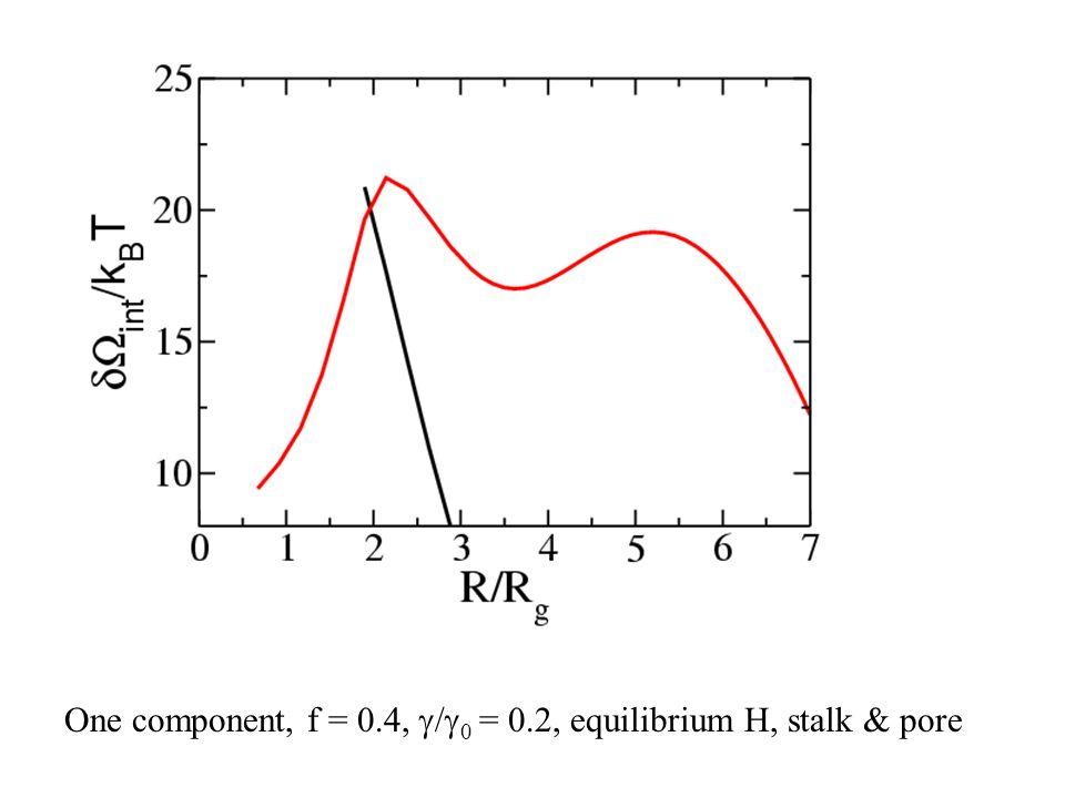 One component, f = 0.4,  /  0 = 0.2, equilibrium H, stalk & pore