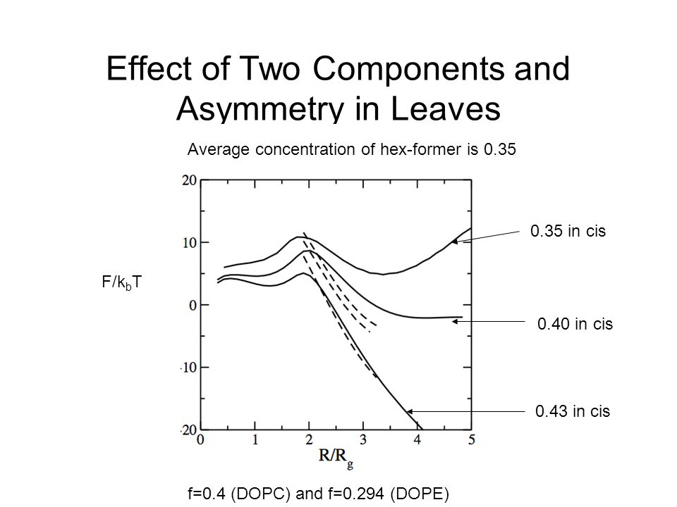 Effect of Two Components and Asymmetry in Leaves Average concentration of hex-former is 0.35 0.35 in cis 0.40 in cis 0.43 in cis F/k b T f=0.4 (DOPC)
