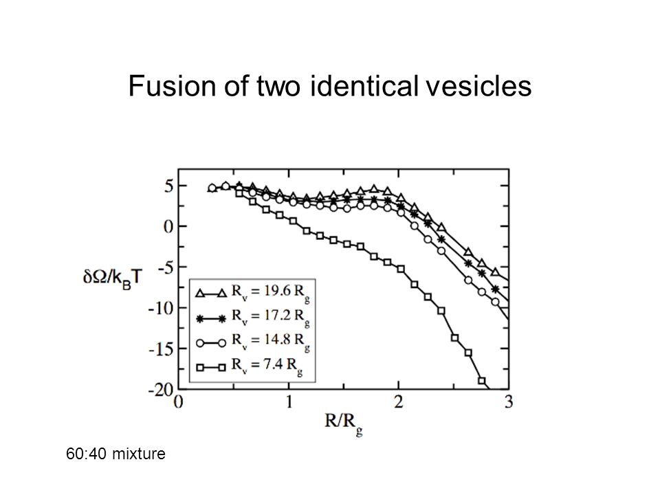 Fusion of two identical vesicles 60:40 mixture
