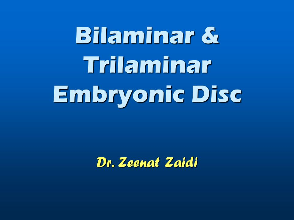 Bilaminar Embryonic Disc The Second Week
