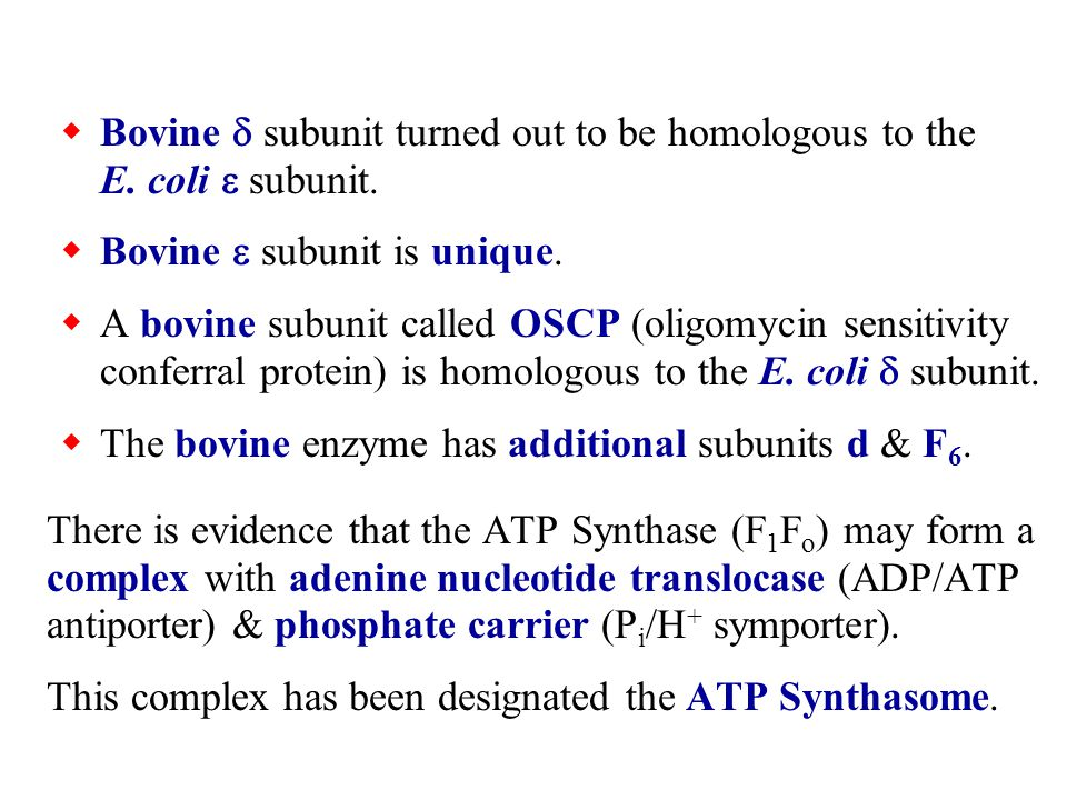  Bovine  subunit turned out to be homologous to the E.