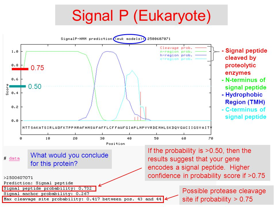 Signal P (Eukaryote) If the probability is >0.50, then the results suggest that your gene encodes a signal peptide.