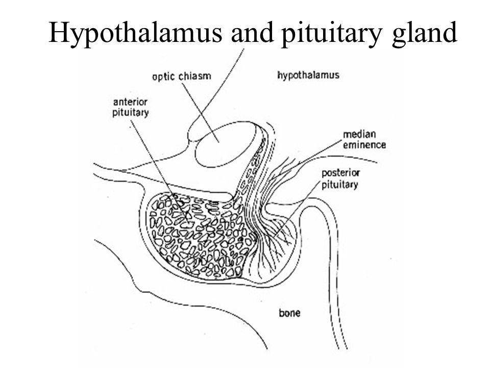 Hypothalamus-pituitary axis