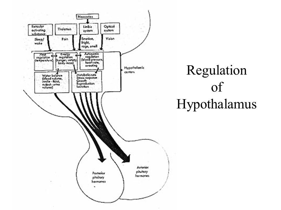 Posterior pituitary hormones: ADH (AVP) and Oxytocin (really hypothalamic hormones)  Both are synthesized in the cell bodies of hypothalamic neurons  ADH: supraoptic nucleus  Oxytocin: paraventricular nucleus  Both are synthesized as preprohormones and processed into nonapeptides (nine amino acids).