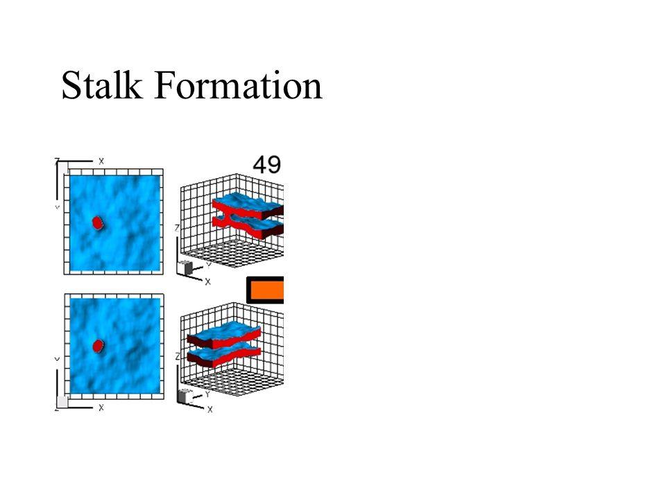 Stalk Formation