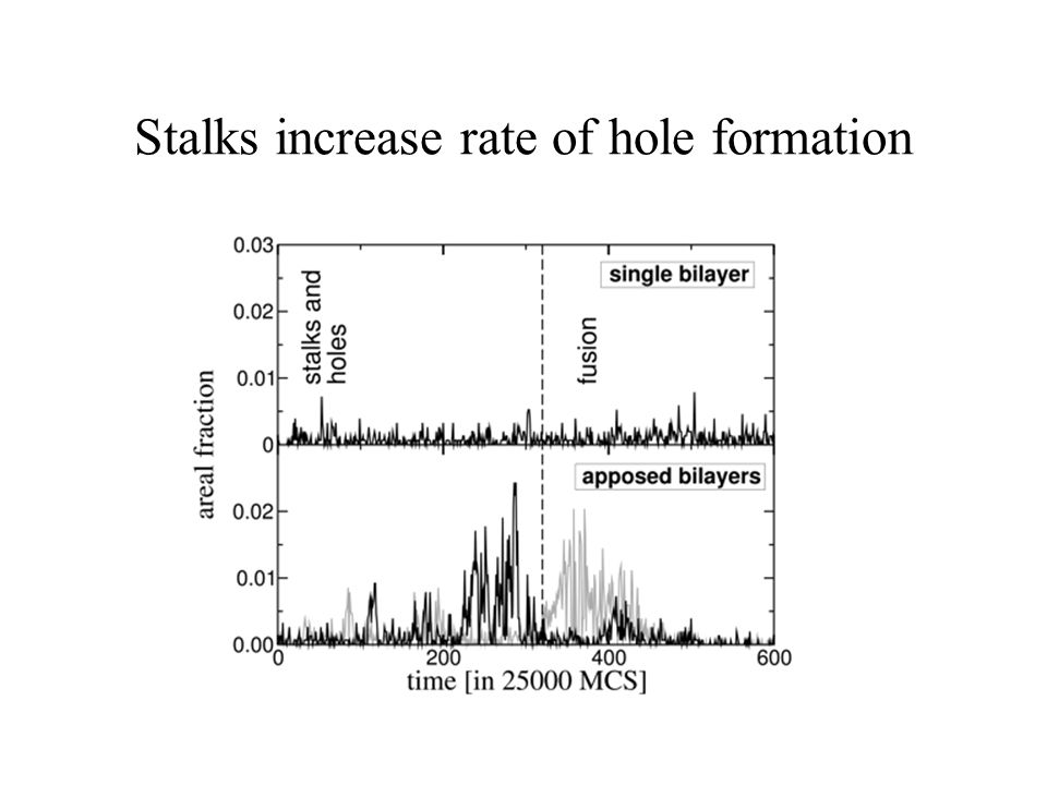 Stalks increase rate of hole formation