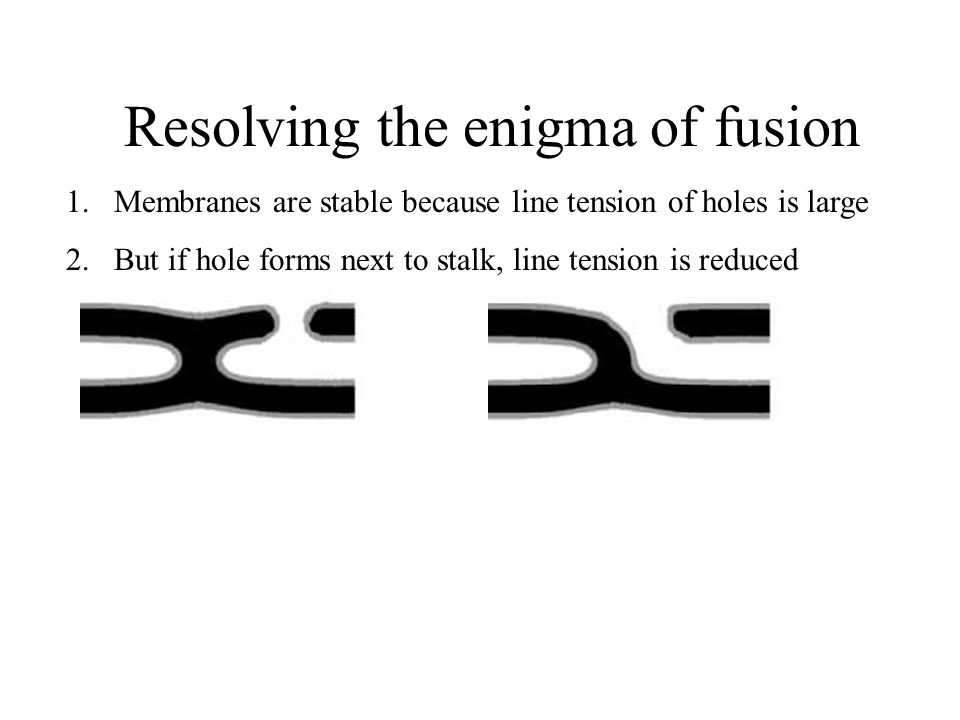 Resolving the enigma of fusion 1.Membranes are stable because line tension of holes is large 2.But if hole forms next to stalk, line tension is reduced