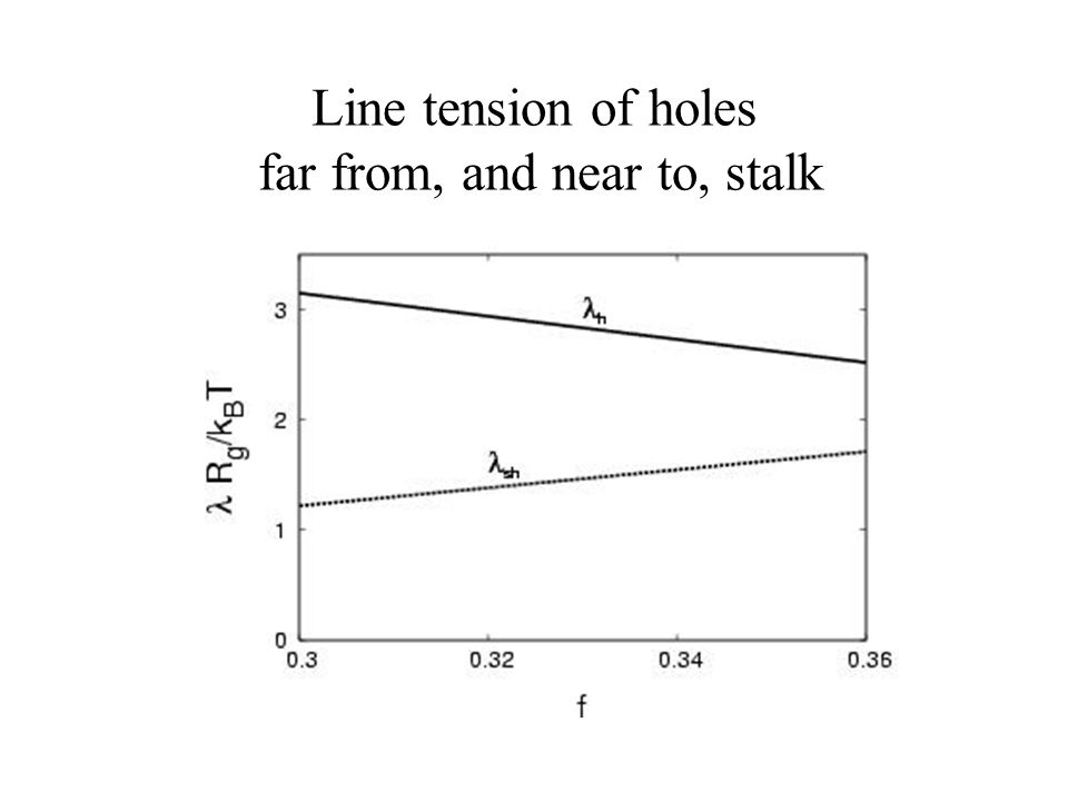 Line tension of holes far from, and near to, stalk