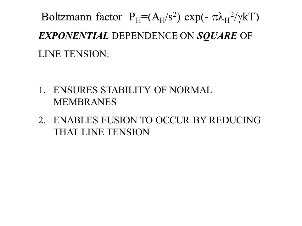 Boltzmann factor P H =(A H /s 2 ) exp(-     kT) EXPONENTIAL DEPENDENCE ON SQUARE OF LINE TENSION: 1.ENSURES STABILITY OF NORMAL MEMBRANES 2.ENABLES FUSION TO OCCUR BY REDUCING THAT LINE TENSION