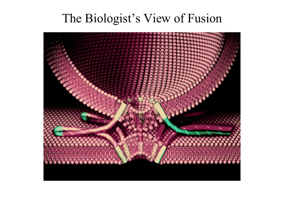 The Biologist's View of Fusion
