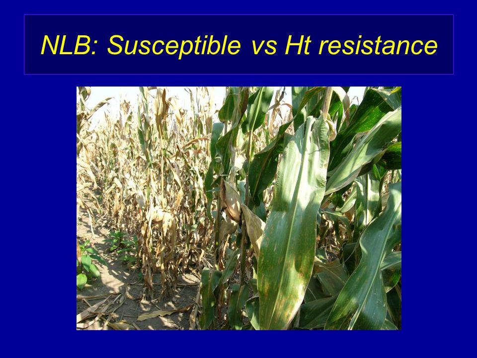 NLB: Susceptible vs Ht resistance