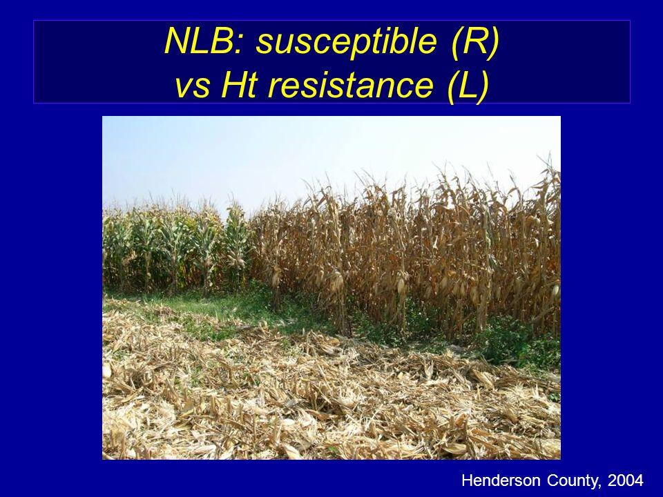 NLB: susceptible (R) vs Ht resistance (L) Henderson County, 2004