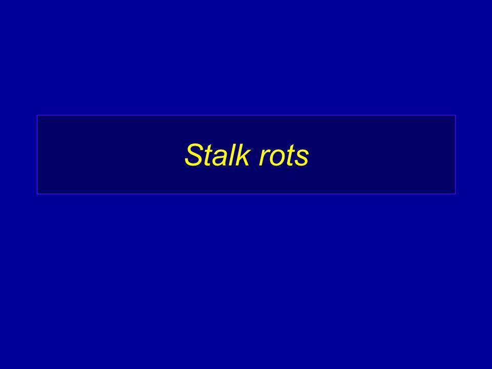 Stalk rots