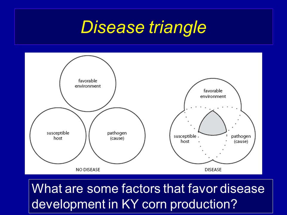 Disease triangle What are some factors that favor disease development in KY corn production?