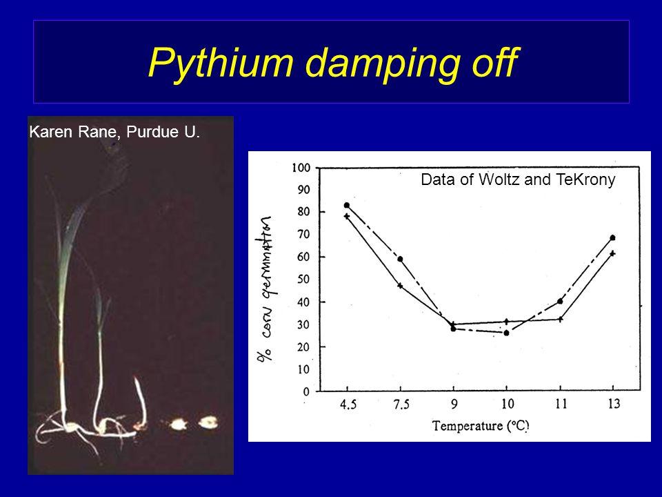 Pythium damping off Data of Woltz and TeKrony Karen Rane, Purdue U.
