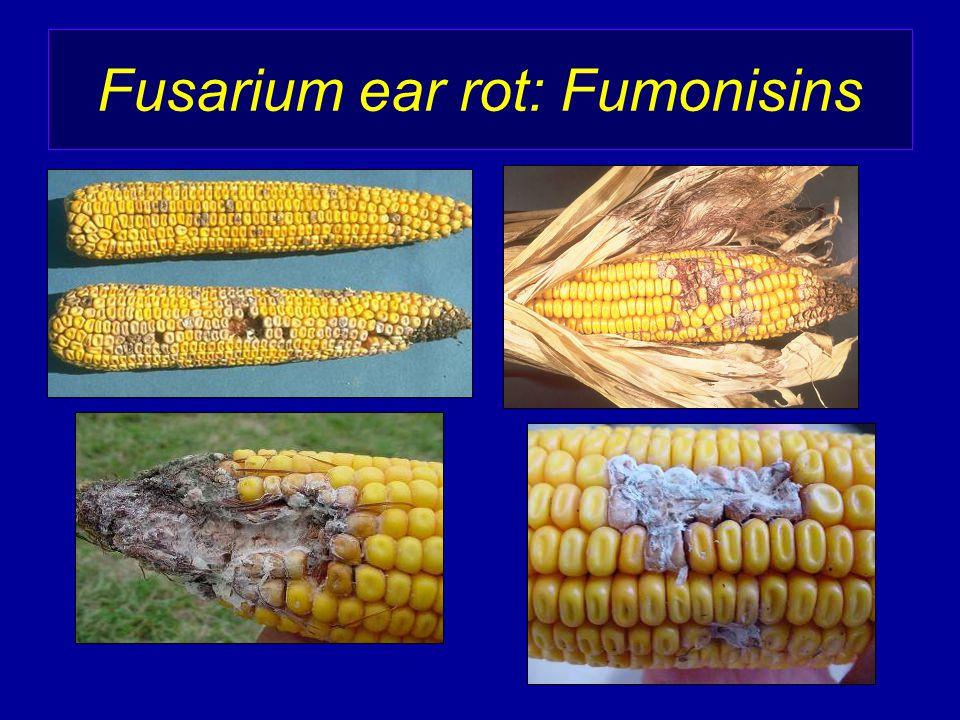 Fusarium ear rot: Fumonisins
