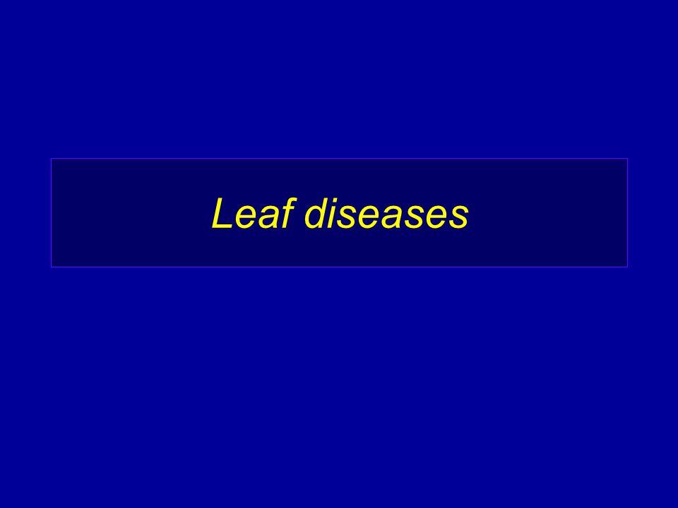 Leaf diseases