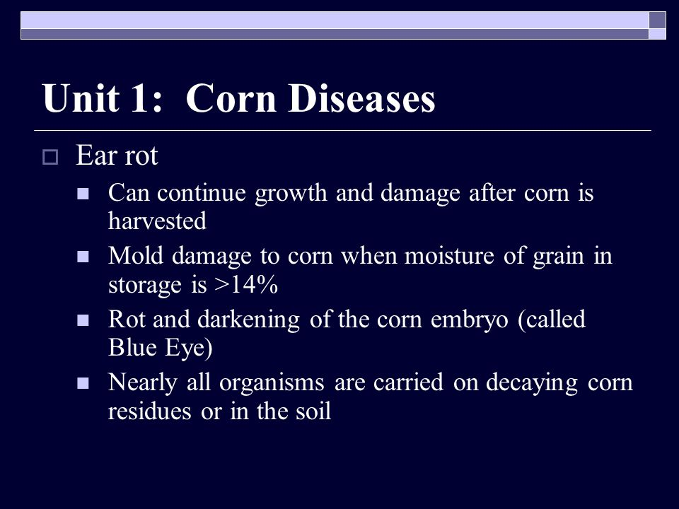 Unit 1: Corn Diseases  Ear rot Can continue growth and damage after corn is harvested Mold damage to corn when moisture of grain in storage is >14% Rot and darkening of the corn embryo (called Blue Eye) Nearly all organisms are carried on decaying corn residues or in the soil