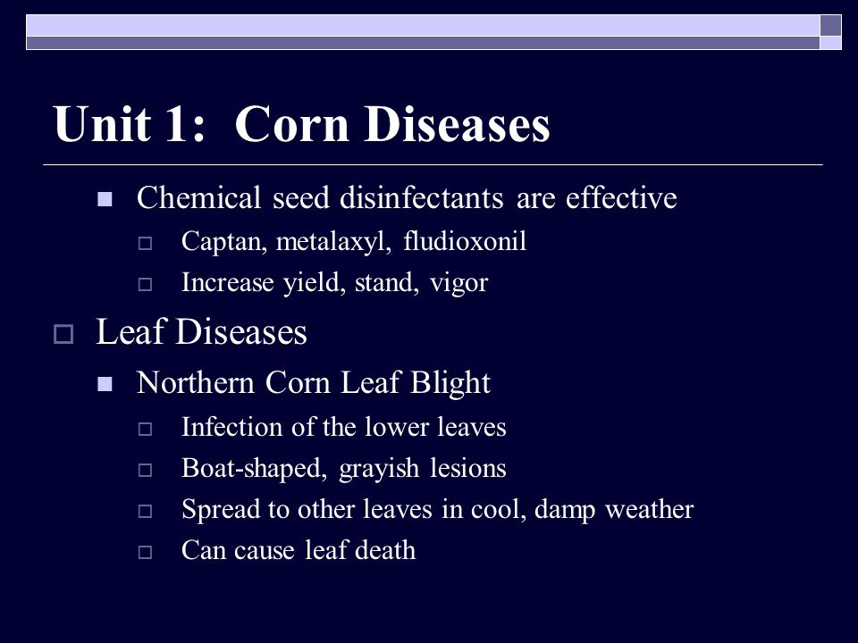 Unit 1: Corn Diseases Chemical seed disinfectants are effective  Captan, metalaxyl, fludioxonil  Increase yield, stand, vigor  Leaf Diseases Northern Corn Leaf Blight  Infection of the lower leaves  Boat-shaped, grayish lesions  Spread to other leaves in cool, damp weather  Can cause leaf death